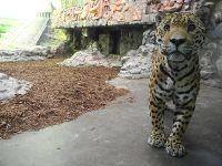 jaguarhaus_02